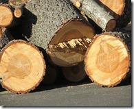 Holz Schnitt frisch