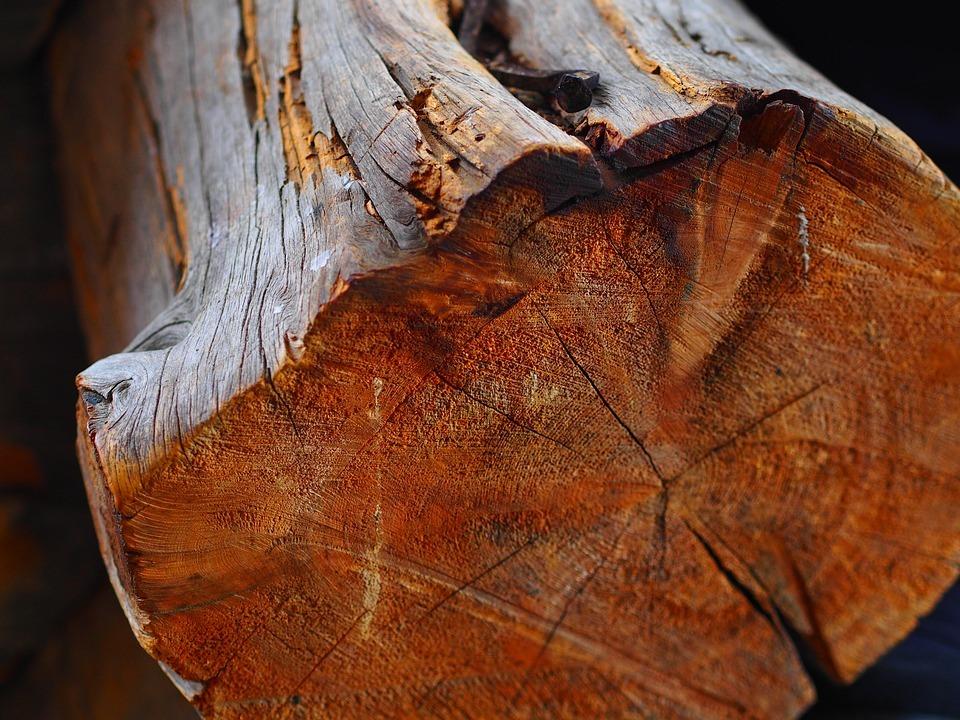 Holzqualität Bestimmen Merkmale Eigenschaften Von Holz