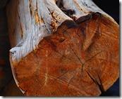 Holzarten Ratgeber